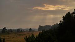 Rays (Steenjep) Tags: landskab landscape hede heat skov forest tree træ sky himmel cloud stråler ray sun sunset outrup ørre røjen sneptrup sunds jylland ovstrup