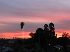 fullsizeoutput_a218 (lnewman333) Tags: sunset highlandpark nela northeastlosangeles palmtree view dtla downtownlosangeles ca usa socal southerncalifornia