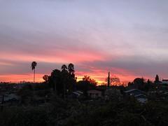 fullsizeoutput_a217 (lnewman333) Tags: sunset highlandpark nela northeastlosangeles palmtree view dtla downtownlosangeles ca usa socal southerncalifornia cyprus cyprustree
