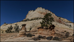 _SG_2019_10_0691_IMG_6784 (_SG_) Tags: ferien reise travel trip roundtrip round usa america amerika us vereinigte staaten vereinigtestaaten west coast united states westcoastoftheunitedstates westcoast westküste zion national park utha springdale canyon navajo sandstone