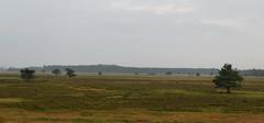 Wolfs land (Steenjep) Tags: hede heat landskab landscape tree træ grass jylland jutland