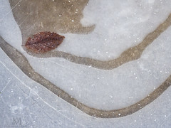beauty at your feet (marianna armata) Tags: macro frozen puddle leaf bubbles winter ice mariannaarmata