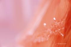 Mujer vestida de fiesta (-Ana Lía-) Tags: flickr nikon mujer fiesta alegría luz luces imagen rostro color sensación minimalista retrato argentina buenosaires mdq rosa analialarroude femme abstracto woman bella donna art pastel abstract esencia vibrant