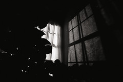 From the archives... (Sarah Rausch) Tags: sony minolta28mm28 hww windowwednesday archives vintageglass grainy lookslikefilm monochrome mono blackandwhite shadow shadows silhoutte lowkey original 28 houseplant monstera