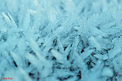 On a cold and frosty morning (Blind Frog) Tags: frost icecrystals cold ice frosty freezing winter
