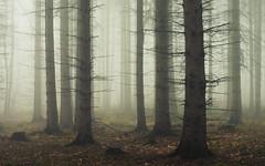 Depth (Netsrak) Tags: baum bäume eu eifel europa europe forst landschaft natur nebel rheinland rhineland wald fog forest landscape mist nature trees winter woods