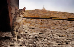 Guardian of the Temple (Marija Mimica) Tags: colors cat roof stone