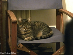 December 17th, 2019 Garden chairs cleaned and brought inside for winter (karenblakeman) Tags: chair cat willowmeowmau tabby 2019 2019pad december uk