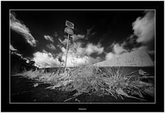 Urban Nature (Bartonio) Tags: bw ir canaryislands islascanarias infrared modified lapalma blanconegro laowa1018mm45 sonya7ir nature urbannature urban