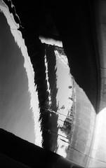 寒天培地 (agar medium) (Dinasty_Oomae) Tags: argusc3 argus アーガス アーガスc3 白黒写真 白黒 monochrome blackandwhite blackwhite bw outdoor 東京都 東京 tokyo chiyodaku 千代田区