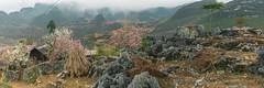 _MG_8211-13.0312.Mèo Vạc.Hà Giang (hoanglongphoto) Tags: asia asian vietnam northvietnam northeastvietnam landscape scenery vietnamlandscape vietnamscenery morning mist mountain mountainous mountainouslandscape mountainouslandscapeinvietnam spring flower rock rocks house sierra canon canoneos5dmarkii đôngbắc hàgiang mèovạc phongcảnh buổisáng mùaxuân núi dãynúi sườnnúi hoa hoađào ngôinhà tảngđá đá nhữngtảngđá sươngmù peachblossom hoamận plumblossom zeissdistagont235ze hoanglongphoto meovaclandscape hagianglandscape springinthehagiang northernvietnam hàgiangmùaxuân hoađàohàgiang hoađàomèovạc núiđáhàgiang 1house hoamậnhàgiang earlyfrost earlymorningfog fog sươngmùhàgiang sươngsớm flanksmountain panorama