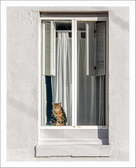 Le Chat (Timothy Valentine) Tags: wednesday 1219 large shutters cat curtain wall 2019 window stonington connecticut unitedstatesofamerica