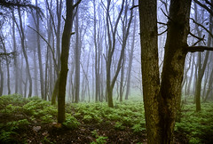 Haunted Forest (Bernd Schunack) Tags: mystic nature fog mist haunted forest wood landscape mountain highlands hinterland sicilia sicily italy moss rain magic trees hiking november autumn fall panasonic lumix gx9