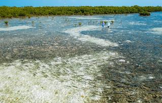 Bahamas Bonefishing Lodge - Abaco Island 46