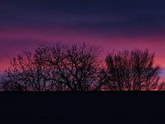 This is the Day (Robert Cowlishaw (Mertonian)) Tags: facingeast canonpowershotsx70hs sx70hs powershot canon robertcowlishaw mertonian parasophia beauty beautiful wonder awe ineffable purpledawn dawn