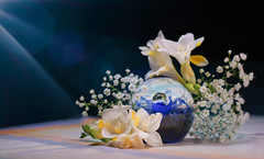 Surrounded (Elisafox22) Tags: elisafox22 sony ilca77m2 100mmf28 macro macrolens telemacro lens hbw bokehwednesday bokeh flower flowers freesias blue glass paperweight handblown light texture pattern shadows stilllife table tabletop indoors elisaliddell©2019