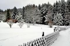Décembre 2018 ... en N&B ... !!! (Nathery Reflets) Tags: hiver neige hohbuhl grendelbruch alsace basrhin grandest nature paysage