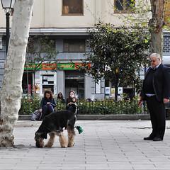 A man and his dog (-hndrk-) Tags: plazadelcarmen madrid candid hndrk dog boss spain espana spectators nikond90 april2012justmarried terrier