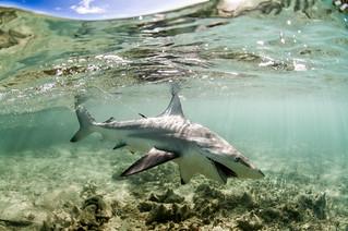 Bahamas Bonefishing Lodge - Abaco Island 39