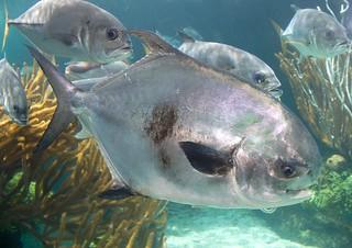 Bahamas Bonefishing Lodge - Abaco Island 32