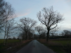 heading home on a december eve (achatphoenix) Tags: december dezember evening abend sunset road roadtrip roadside street strase backroad rural trees treetops baum arbre eastfrisia enroute enpassant whiledriving