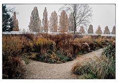 (schlomo jawotnik) Tags: 2019 november hannover herrenhäusergärten berggarten kies wege bäume pflanze gewächshaus gestrüpp analog film kodak kodakproimage100 usw