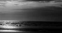 East Wittering Beach at Low Tide (M.T.A.V) Tags: horse horses beach bw bythebeach bythewater blackandwhite blackwhite black britishcoast coast southcoast eastwittering sky grey light lowtide tide tidal sand seaside sea seashore seascape water canon monochrome westsussex white canoneos750d canon750d south efs1855mm england