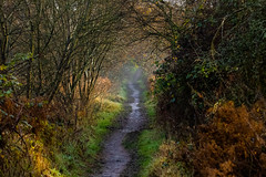Better in colour.. (haslerbryan) Tags: muddy trees contrast vividcolours broxbourne hertfordshire 2019 december colours greatbritain uk canoneos canon80d path autumn elements