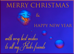 Christmas microcrystal greeting (Mister Electron) Tags: dic lm nikonmicrophotfx nomarski aquarium diatoms differentialinterferencecontrast x40objective microscopic crystals christmas noel navidad festive