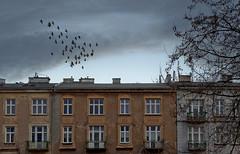 Krakow (Anders_3) Tags: krakow poland architecture city cityscape sky pigeons unescoworldheritage nikon polska cracow building apartments flight birds 7s77495v4