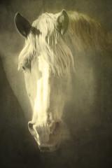 golden palomino (Hal Halli....happy everything!!) Tags: horse palomino animal farm gold