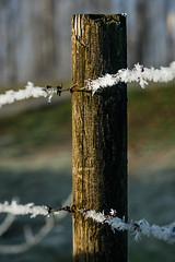 Warm Light (Prestidigitizer) Tags: hoarfrost winter frost fence barbedwire ice cold frozen pentaxk3 pentaxda50135mm fencepost