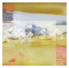 seaside... multiple exposures (Peter & Olga) Tags: seaside seagulls beach abstract interpretation kiama southcoast 2019 spring fujifilm olgabaldock