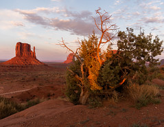 Monument Valley   |   Desert Vegetation (JB_1984) Tags: westmitten butte monument geologicalformation shadow light red colour sunset glow evening navajo navajonation oljatomonumentvalley monumentvalley arizona az unitedstates usa nikon d500 nikond500