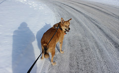 My dog in winter (pegase1972) Tags: dog chien hiver neige winter snow