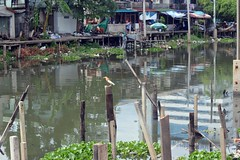 the view across the canal with an unusual bird on a pole in the foreground (the foreign photographer - ฝรั่งถ่) Tags: may212016nikon unusual bird pole canal trash khlong thanon bangkhen bangkok thailand nikon d3200