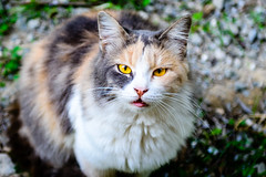 Stray Cat Ooozes Charm (George Plakides) Tags: cat stray charming charm larnaca