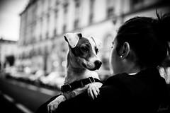 Marre des chats. (LACPIXEL) Tags: marre harto fedup chien dog perro rue street calle reims marne france noiretblanc blancoynegro blackwhite nikon nikonfr flickr lacpixel littledoglaughednoiret