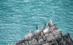 Méditerranée (balese13) Tags: canon catalan méditerranée pyrénéesorientales s3is yourbestoftoday balese bird bleu eau mer oiseau pixelistes powershot rocher water cerbère 250v10f 500v20f 1500v60f