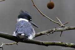 Nemesis bird (RKop) Tags: 4seasonsmarina raphaelkopanphotography nikon d500 600mmf4evr ohio