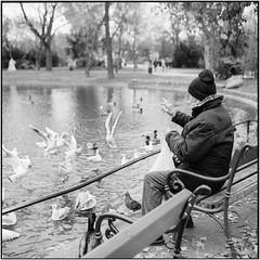 """...Tauben vergiften im Park...""_Rolleiflex 3.5B (ksadjina) Tags: 10min 150 6x6 austria kodak400tmax nikonsupercoolscan9000ed november2019 rodinal rolleiflex35b silverfast stadtpark vienna blackwhite film scan wien"