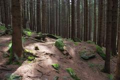 All'ombra del bosco (cesco.pb) Tags: valleaurina lutago sudtirol altoadige alps alpi italia italy canon canoneos60d tamronsp1750mmf28xrdiiivcld montagna mountains
