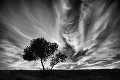 El cielo (una cierta mirada) Tags: sky clouds cloudscape landscape nature tree olive silhouette branches outdoors panasonic dmcgx8 lumix vario
