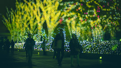 DECEMBER (ajpscs) Tags: ©ajpscs ajpscs 2019 japan nippon 日本 東京 tokyo city ニコン nikon d750 50mm tokyostreetphotography night nightshot tokyonight lights nightphotography citylights tokyoinsomnia dayfadesandnightcomesalive afterdark イルミネーション illumination カラフルなイルミネーション winterillumination colorfulillumination artoflights bokeh 暈け bokehnight