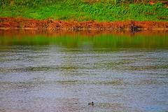 riflessi del Po (archgionni) Tags: fiume river po acqua water riflessi reflections colori colours arancione orange verde green prato riva erba grass torino italy picturesque