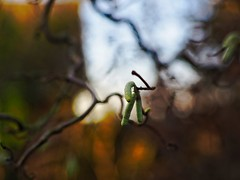 Garden Bokeh | 19. Dezember 2019 | Tarbek - Schleswig-Holstein - Deutschland (torstenbehrens) Tags: garden bokeh | 19 dezember 2019 tarbek schleswigholstein deutschland olympus penf 7xef53mm f12 mein nagelneues yongnuo 50mm f18 meldet an den ef mft adapter es sei ein 75mm objektiv und wird zu einem 53mm umgerechnet olympuspenf 7xef53mmf12