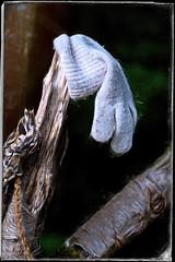 Le gant perdu. (*Jost49* (±Off)) Tags: gant glove laine wool branche tree branch texture