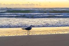 SouthPadreIsland_488 (allen ramlow) Tags: south padre island texas tx landscape seascape beach sand clouds water gulf coast sunrise sony alpha