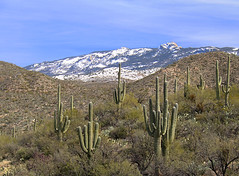 Snow in the Desert (studioferullo) Tags: art beauty bright colorful colourful colors colours contrast dark design light natural nopeople perspective pretty scene sky southwest study sunlight sunshine texture tone world tucson arizona tanqueverde ranch snow mountain cactus saguaro desert