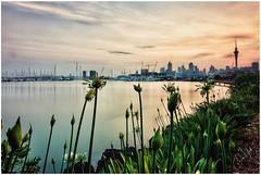 St Marys Bay (cjhall.nz) Tags: newzealand framedinnz tokina1120 canonr wideangle sky garden cityscape landscape marina harbour shoreline auckland westhaven stmarysbay firstlight daybreak dawn sunrise